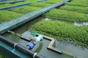 Wastewater Treatment Plant - Indonesia